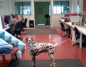 mondo-design-studio-dog