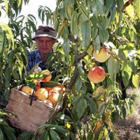 fruit-farm
